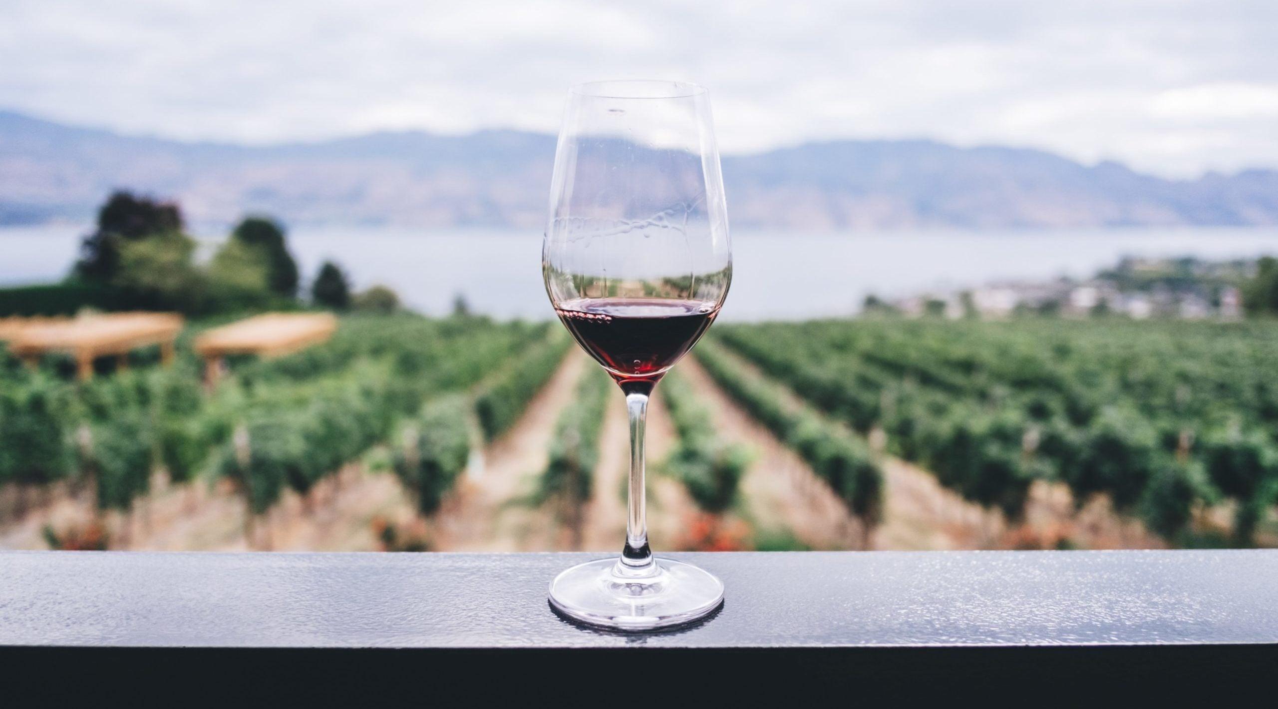 Ein Weinglas vor einem Weinberg zeigt uns, wie viel Rotwein gesund ist, um bei Bluthochdruck zu helfen und als Hausmittel das Immunsystem natürlich zu stärken
