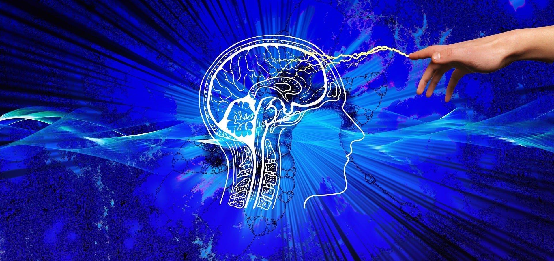 Im Inneren des Gehirns wirkt der Hypothalamus mittels Hormonen wie Leptin und Insulin als Schaltzentrale für Gewichtszunahme