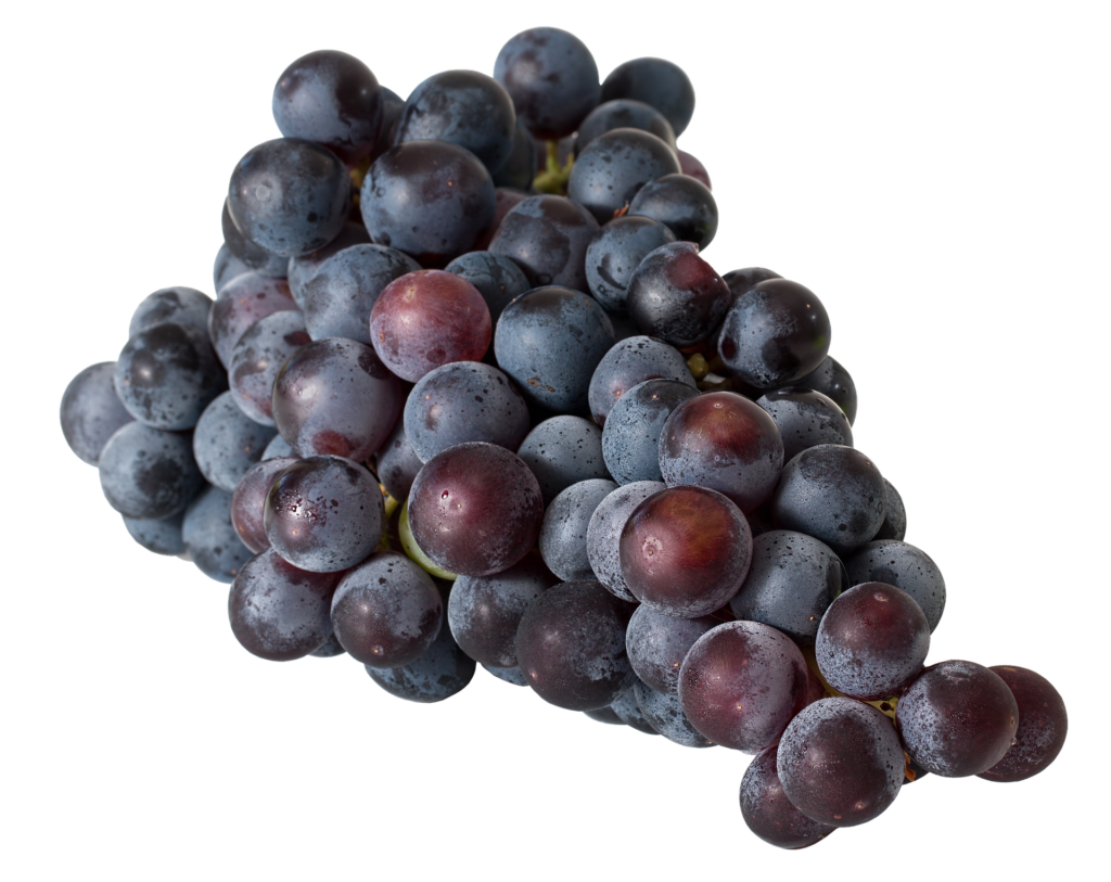 Because the whole grape is used for red wine, it contains more polyphenols than white wine