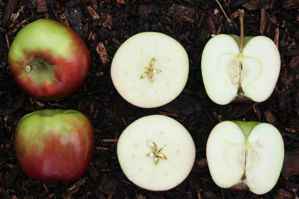 Naturbelassener Apfelessig zum Trinken wird aus dem Saft von Äpfeln fermentiert