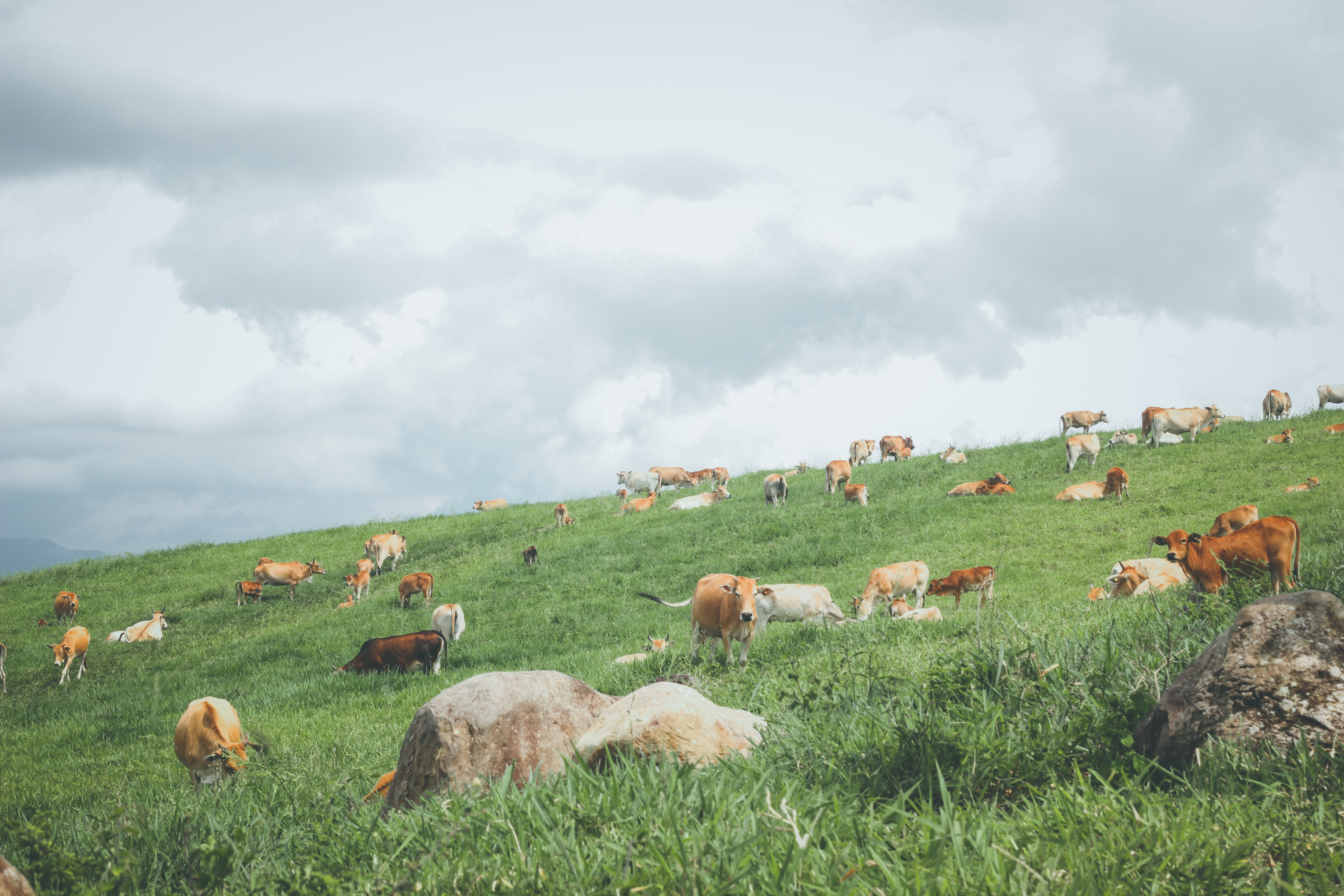 Bad fats vs. good fats on keto - grass-fed beef