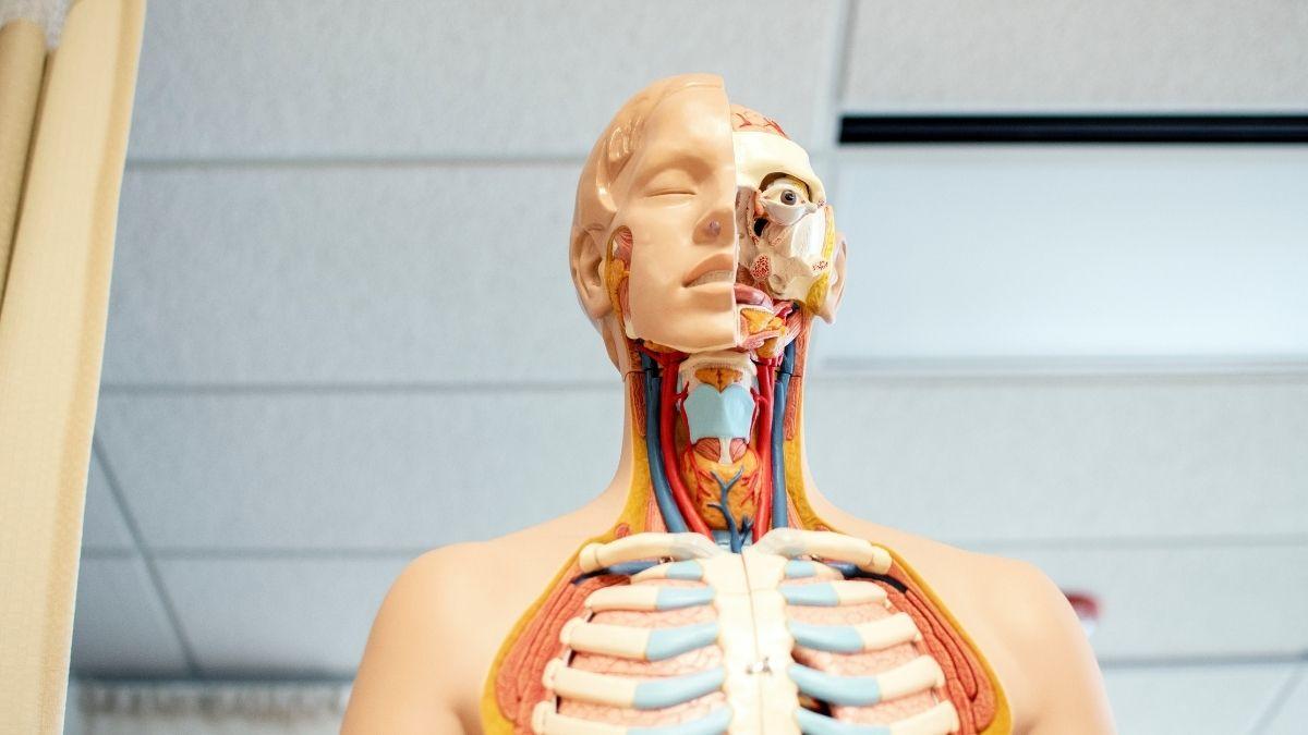 Intervallfasten - was passiert im Körper?