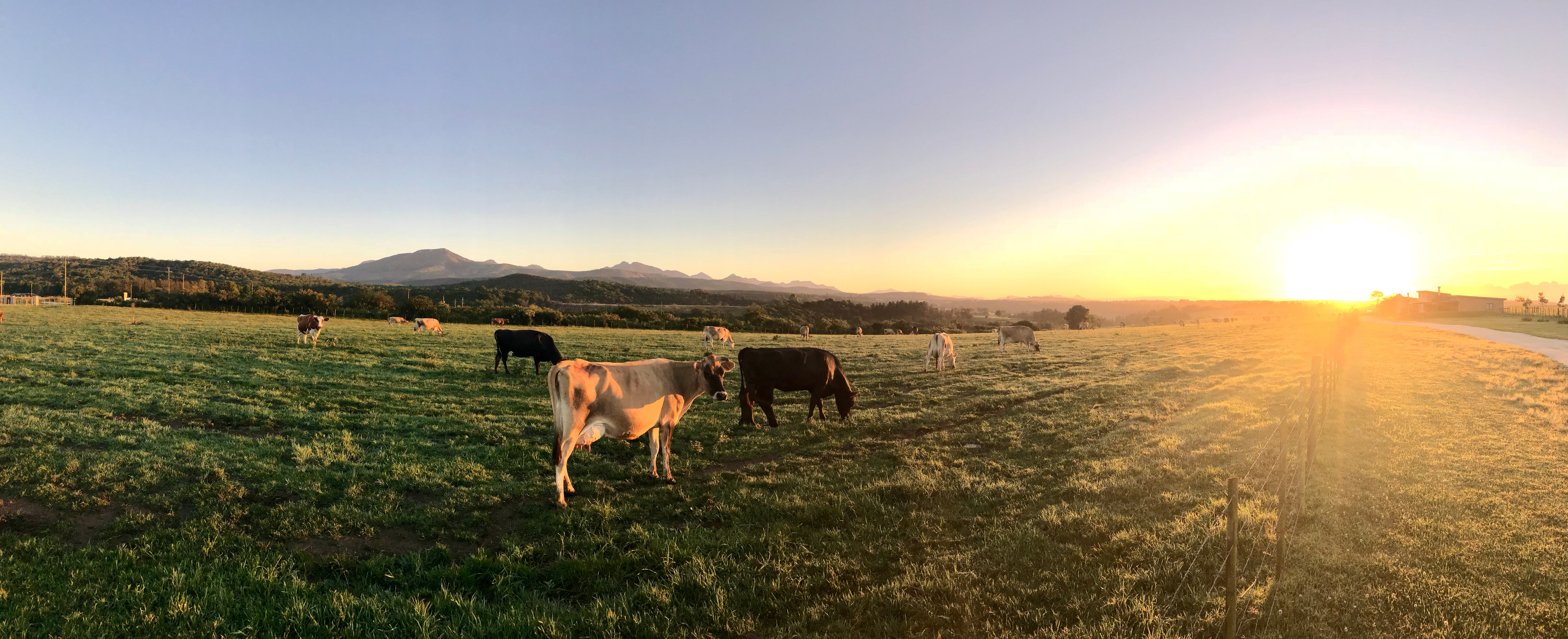 With pasture-based farming, you don't have to eat less meat to protect the environment
