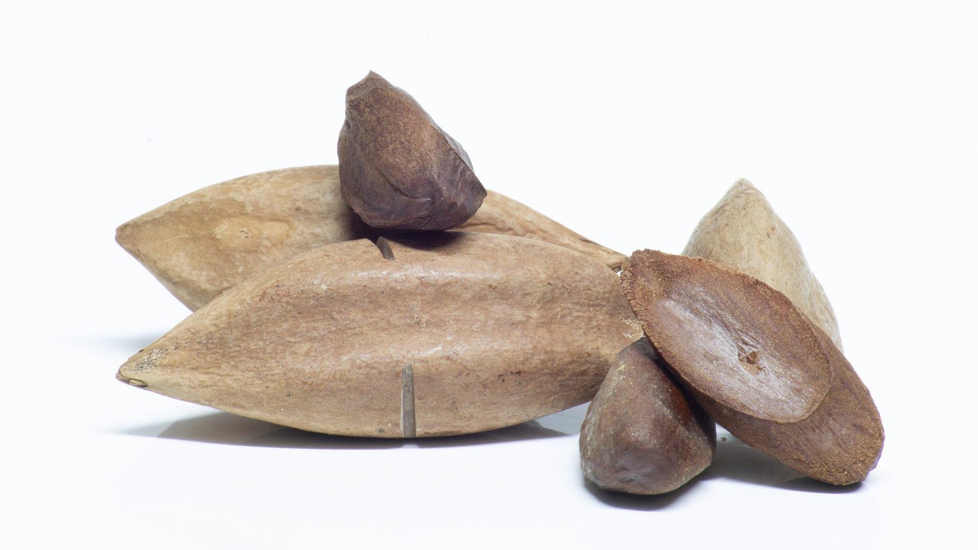 Pilis sind die fettreichsten Nüsse