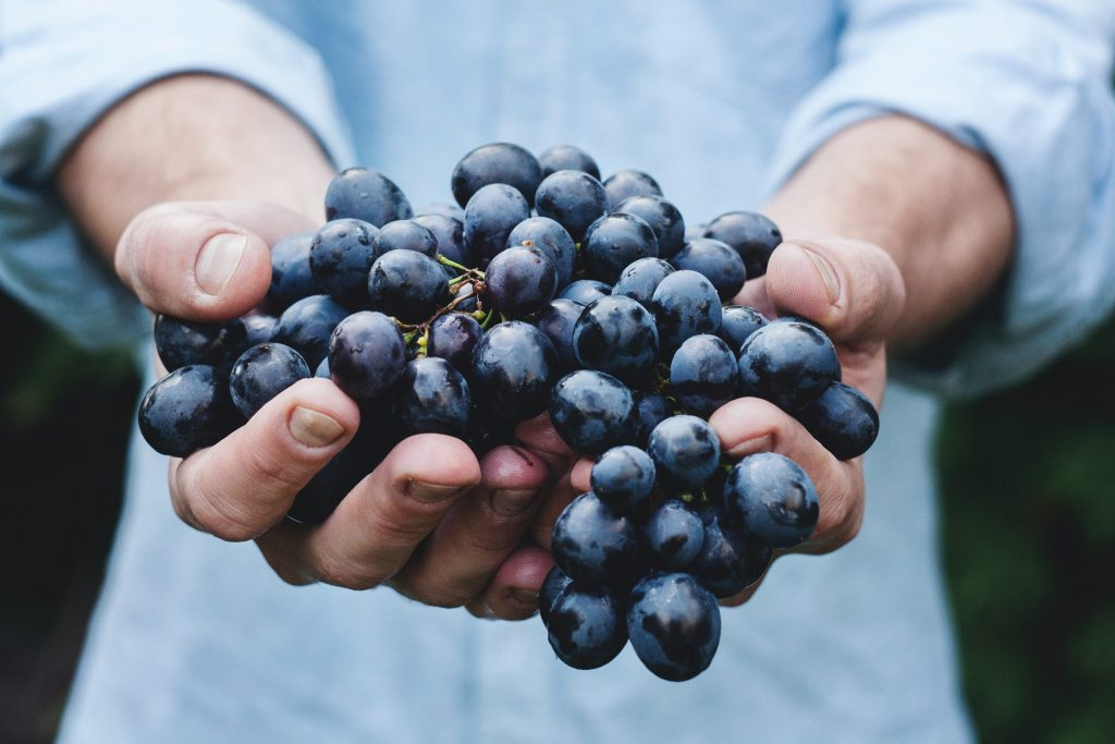 The polyphenols are in the skin of the grapes